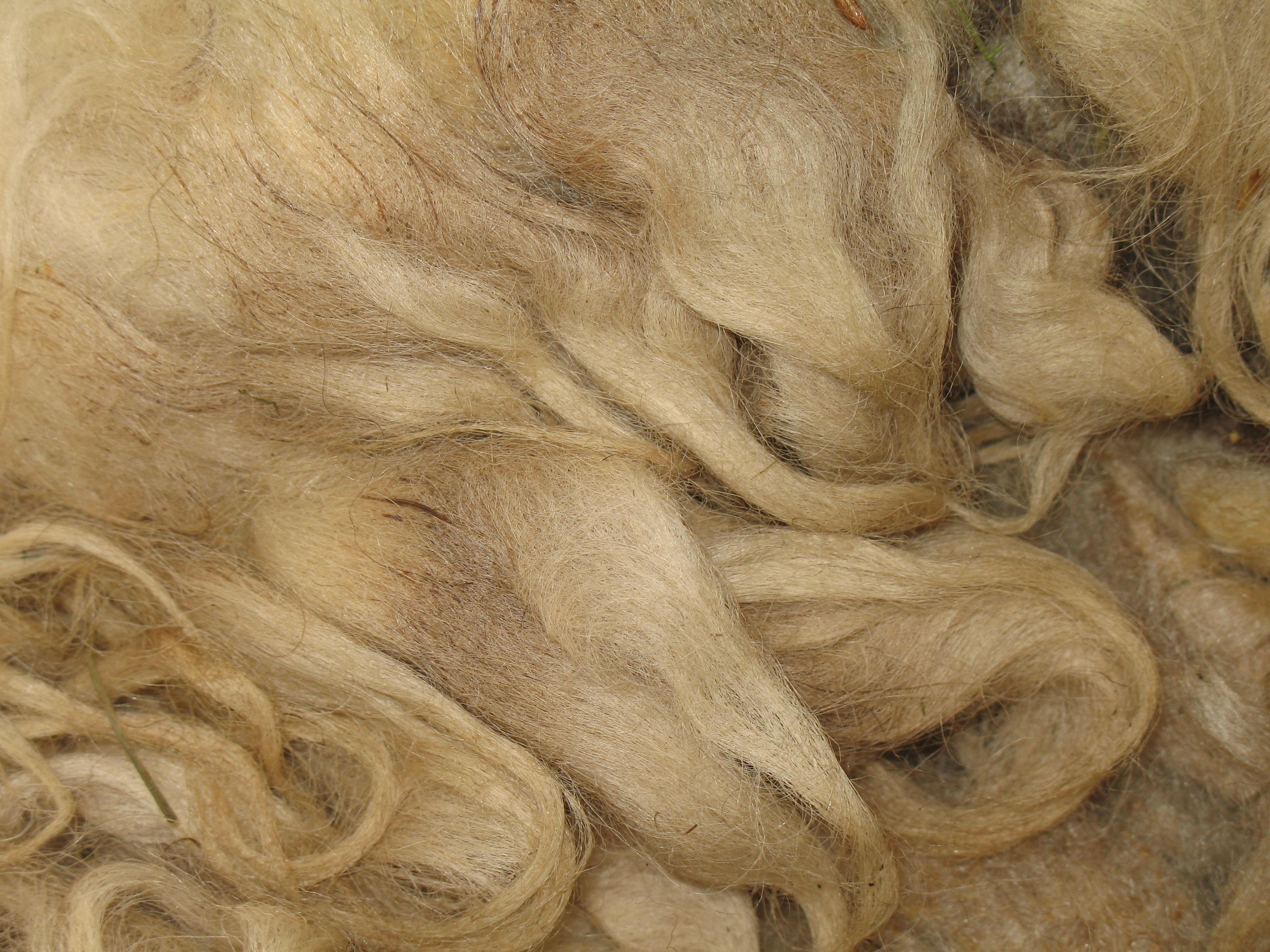 Wool gathering – derekjamescarter